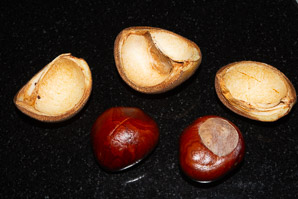 Aesculus × (Red Horse-chestnut)